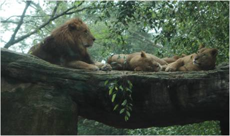 Lion and the Jungle Business Fable